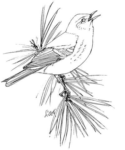 Dibujo de Reinita del pinar para colorear  Dibujos para