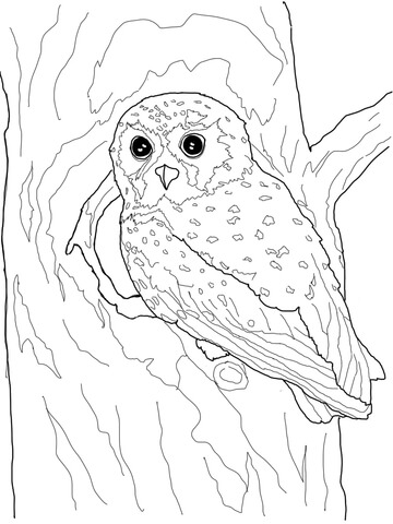 Snowy Owl Worksheets For Preschoolers. Snowy. Best Free