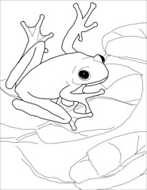 American Green Tree Frog coloring page Free Printable