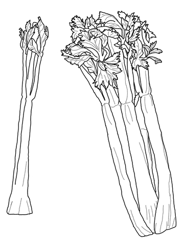 Celery Coloring Page Free Printable Coloring Pages