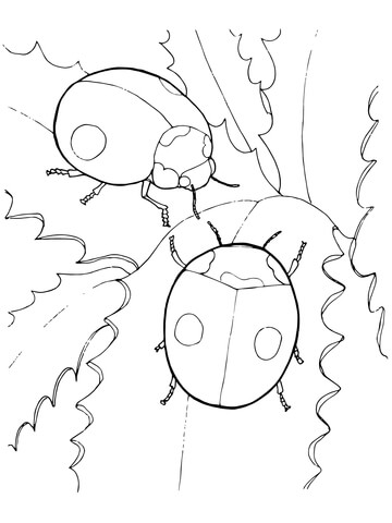 Two Ladybugs Coloring Page Free Printable Coloring Pages