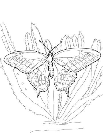 Ausmalbild Schwarzer Schwalbenschwanz  Ausmalbilder