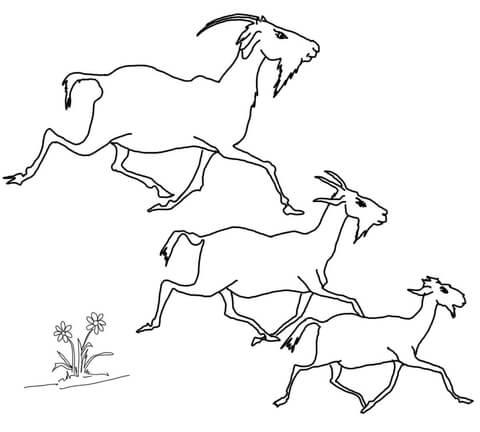 Ausmalbild: Der älteste, mittlere und jüngste Ziegenbock