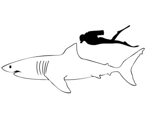 great white shark coloring pages # 61
