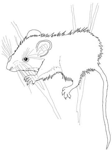 Deer Mouse Coloring Page Free Printable Coloring Pages