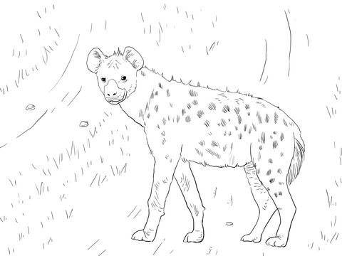 Hyena Pages Coloring Pages