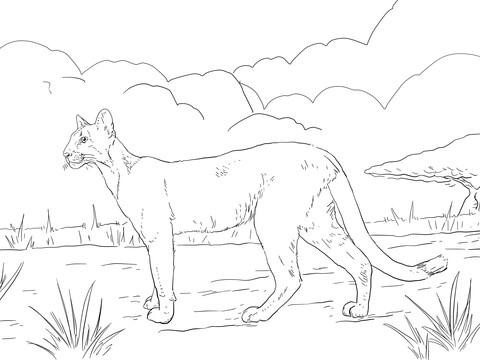 Dibujo de Puma para colorear Dibujos para colorear