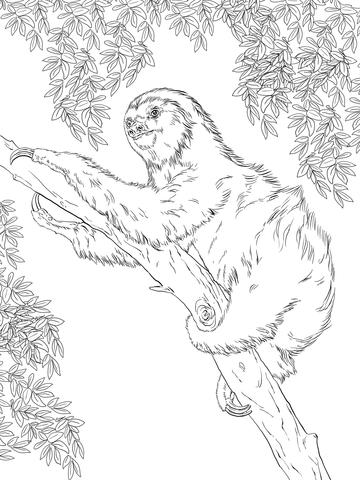 Ausmalbild Zweifingerfaultier auf einem Baum