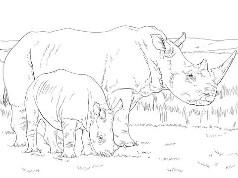 Dibujo de Rinoceronte Blanco Hembra con Cría para colorear