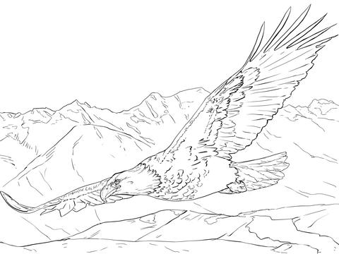 Bald Eagle Soaring Coloring Page Free Printable Coloring