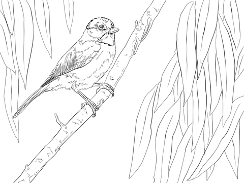 Carolina Chickadee Perched on a Branch coloring page