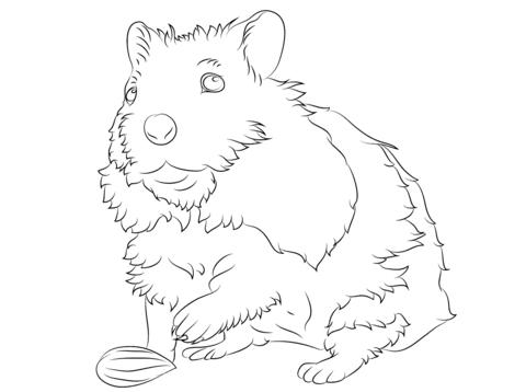 Kleurplaten: Kleurplaat Hamster