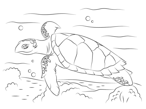 Red Eared Slider Turtle Coloring Page Sketch Coloring Page