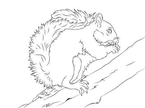 Dibujo de Ardilla Gris de las Carolinas Sobre un Árbol