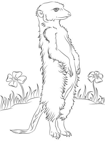 Ausmalbild Erdmännchen und Blumen Ausmalbilder