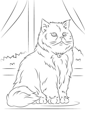 Desenho de Gato persa sentado para colorir  Desenhos para