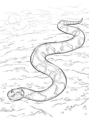 Dibujo de Serpiente Cabeza de Cobre para colorear