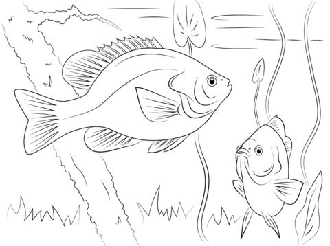 Desenho de Peixe-lua de orelha vermelha para colorir