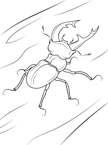Stag Beetle Coloring Page Free Printable Coloring Pages