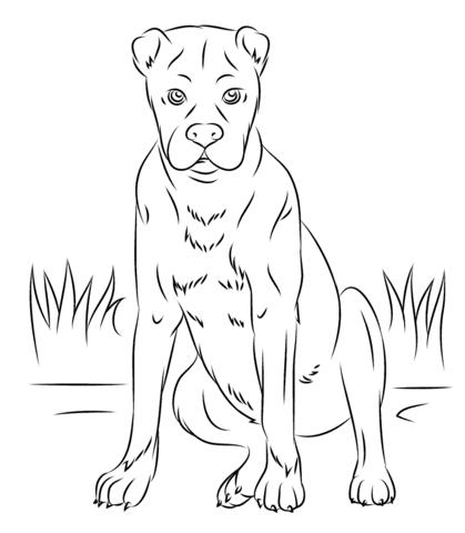 Dibujo De Perros Pitbull A Lapiz