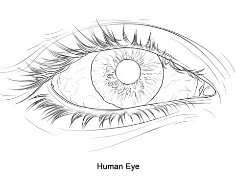 Ausmalbild Das menschliche Auge Ausmalbilder kostenlos