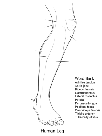 Leg Coloring Sheet Coloring Pages