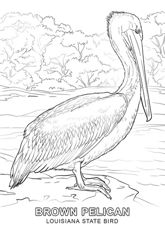 Louisiana State Bird Coloring Page Free Printable