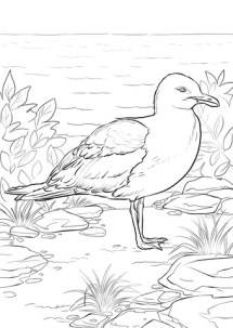 California Gull coloring page Free Printable Coloring Pages