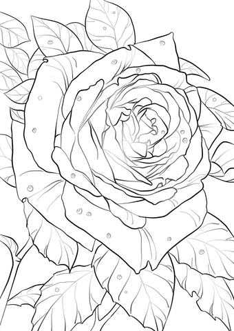 Oklahoma Rose Coloring Page Free Printable Coloring Pages