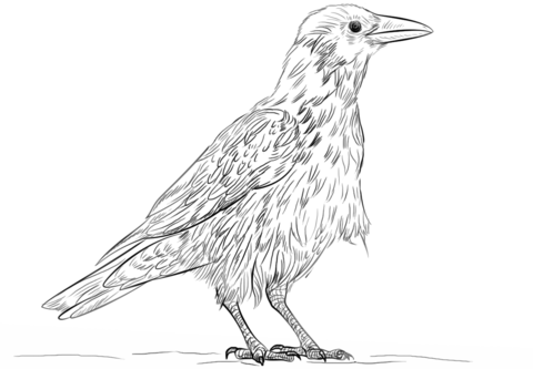 Hooded Crow coloring page Free Printable Coloring Pages