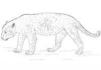 Cara De Jaguar Para Colorear Jaguar Para Dibujar Cara