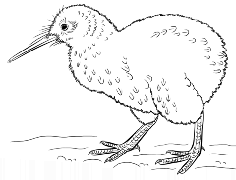 Vogelbilder Zum Ausdrucken