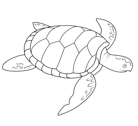 Free Printable Sea Turtle Coloring Pages together with Other moreover HomeDesignOK in addition How To Draw A Cityscape in addition Bagno Con Antibagno Dimensioni. on innovative home design