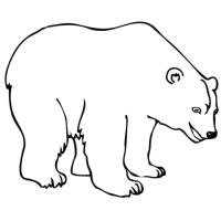 Dibujo de Oso Polar para colorear | Dibujos para colorear ...