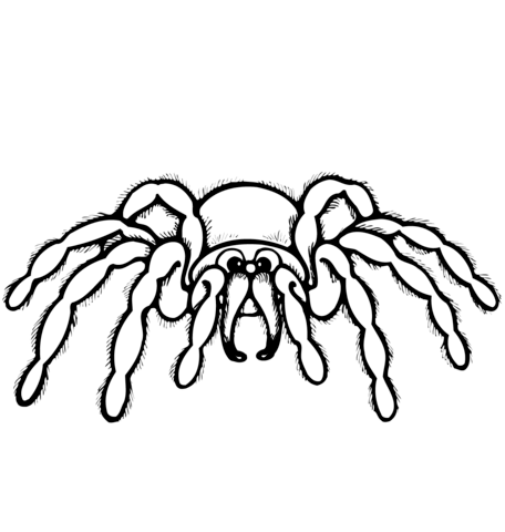 Wolf Spider Life Cycle Sketch Coloring Page