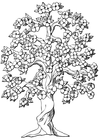 Flowering Apple Tree Coloring Page Free Printable