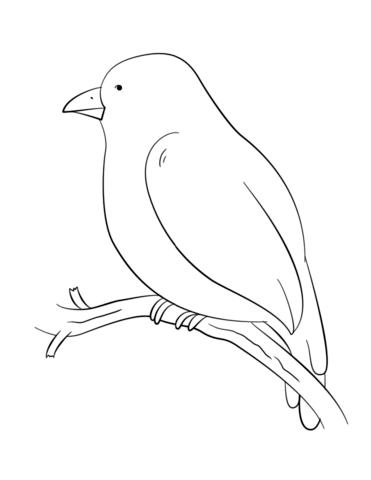 Dibujo de Pájaro en una rama de árbol para colorear