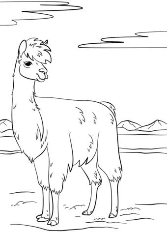 Ausmalbild Lama Ausmalbilder kostenlos zum ausdrucken