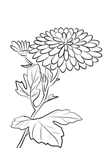 Chrysanthemum Morifolium Coloring Page Free Printable