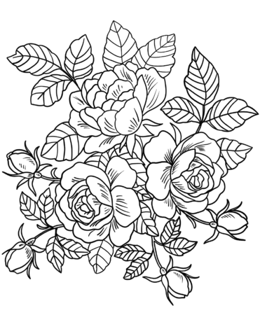 roses flowers coloring page
