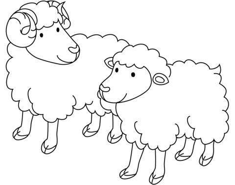 Dibujo de Оveja macho y oveja hembra para colorear