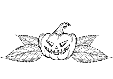 Pumpkins Coloring Pages   Free Coloring Pages - Coloring Home   339x480