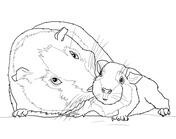 37 Meerschweinchen Bilder Zum Ausmalen - Besten Bilder von