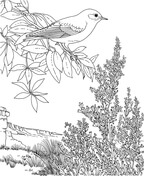 Eastern Bluebird and Hawthorn Missouri State Bird and