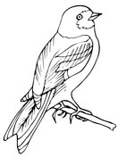 Wren and Yellow Jessamine South Carolina coloring page