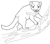 Related Keywords & Suggestions for marsupial drawing