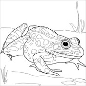 frogs coloring pages # 13