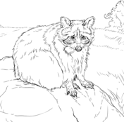 Animals Coloring Pages Super Coloring