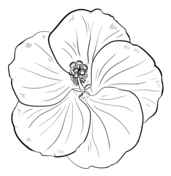 Nene and Hibiscus Hawaii State Bird and Flower coloring