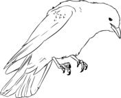 Mockingbird and Bluebonnet Texas State Bird and Flower